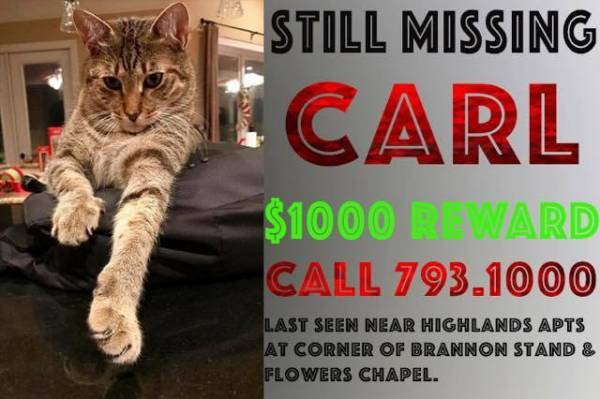 MISSING - Carl The Cat - REWARD Of $ 1,000