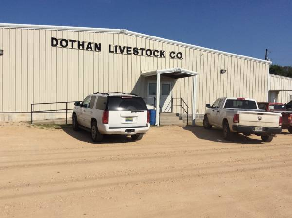Dothan Livestock and Auction - Sunday - Monday - Tuesday