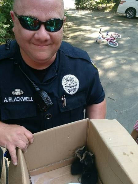 Dothan Officer Rescues Kittens from Car
