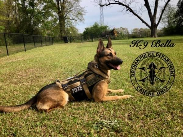 DPD K9 of the day Bella